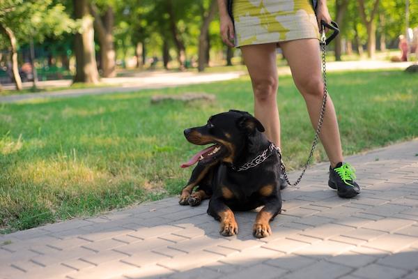 Hundeführerschein Rheinland-Pfalz