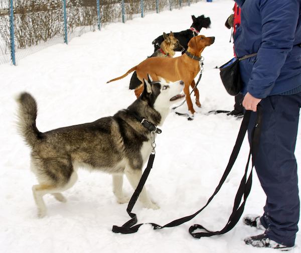 Hundeführerschein Sachsen