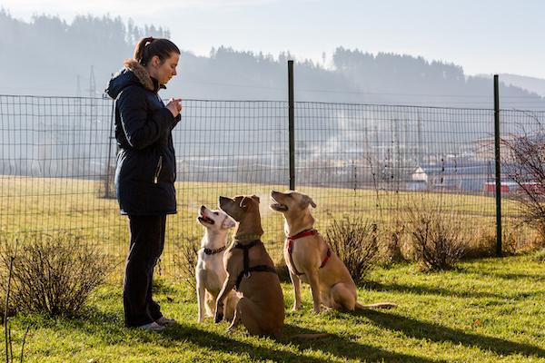 Hundeführerschein Sachsen-Anhalt