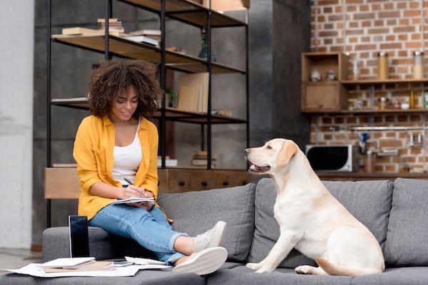 Die theoretische Prüfung für den Hundeführerschein