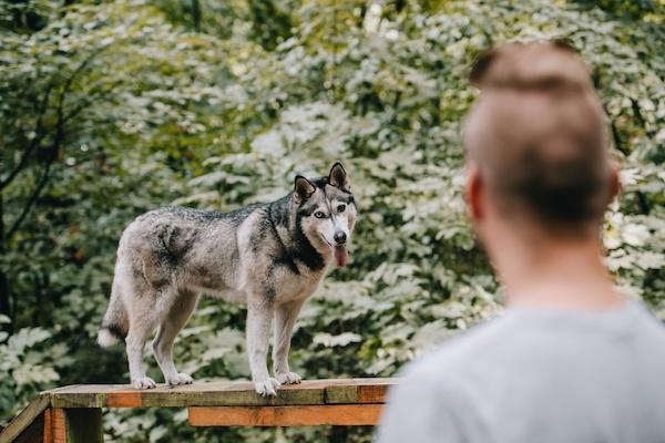 Die praktische Prüfung für den Hundeführerschein